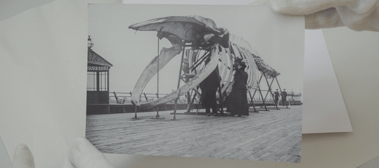 hands holding a black and white print out image of the whale skeleton on Boscombe pier